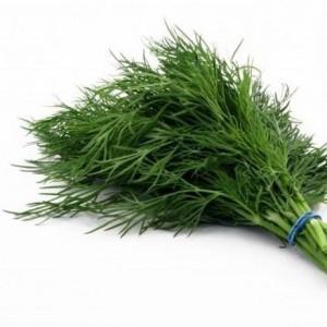 Описание и лечебные свойства семян укропа.