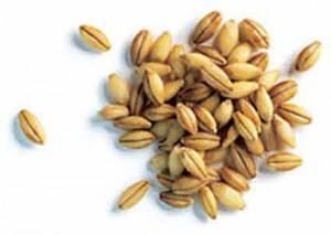 зерна ячменя лечебные свойства