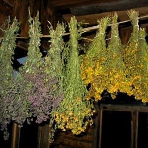 Лечебные свойства трав и их применение
